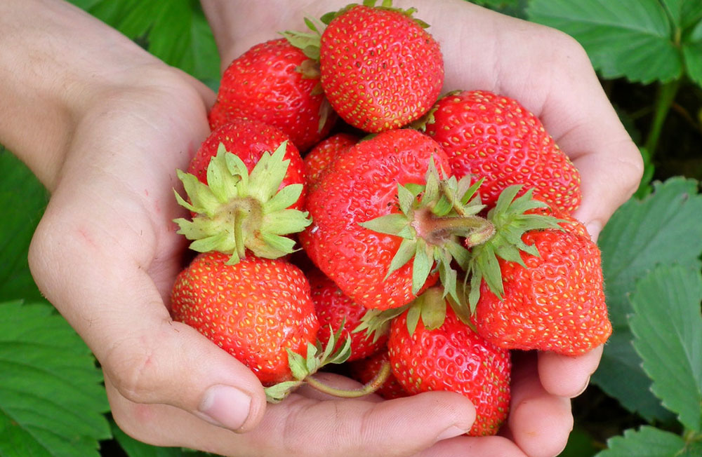 home remedies for yellow teeth strawberries
